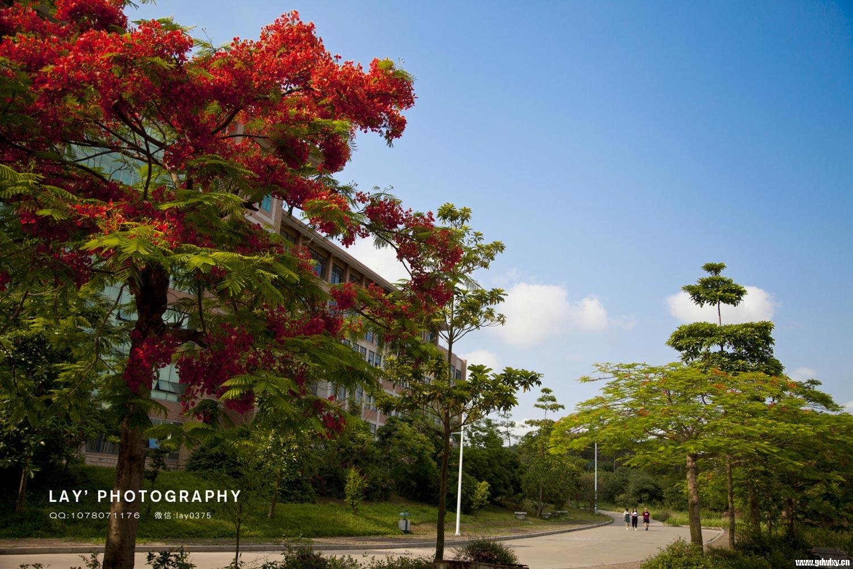 校园风景-校园风光-学院图库-广东文理职业学院